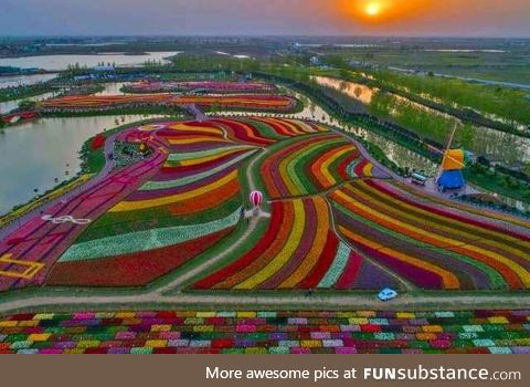 Beautiful tulip fields in Holland