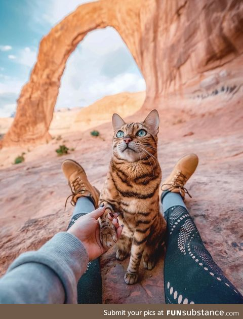 Suki the adventure cat in Moab, Utah