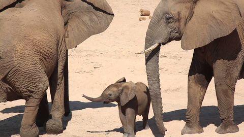 Baby Elephant Gotta go Fast