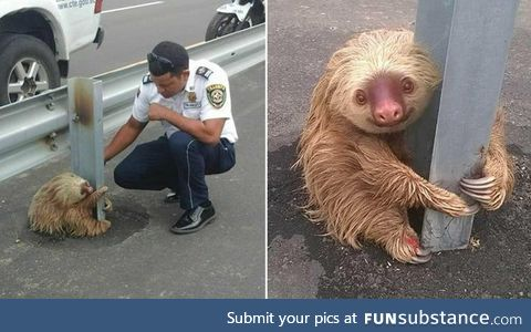 Police officers in Ecuador help a sloth clinging to a pole off of the street
