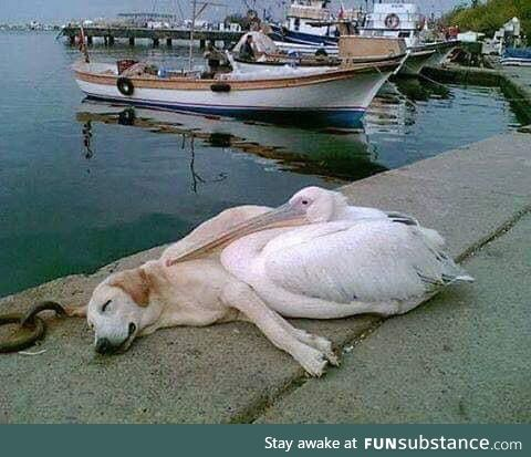 A pelican befriended a stray dog who was often spotted hanging out all alone along the