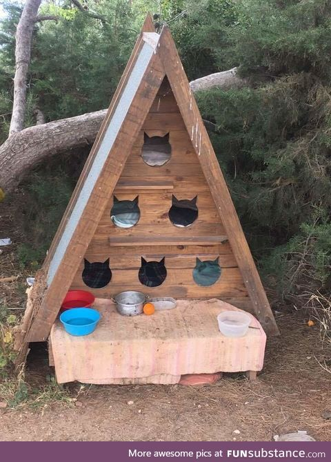 Cat hostel for feral cats in Portugal