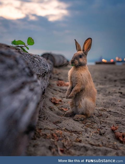 A blonde beach bunny How cute is this?