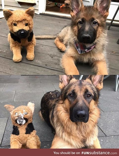 A good boy and his favorite toy over the years