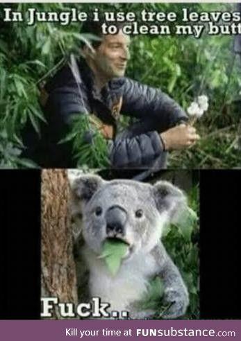 Bear is Bear