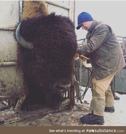Big boy getting check by vet