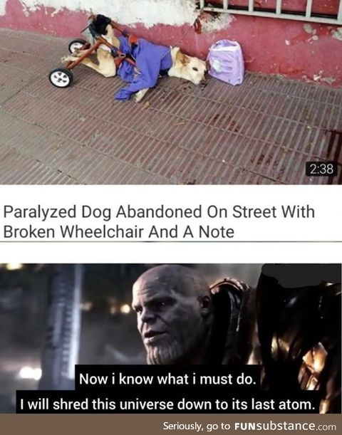 Poor doggo