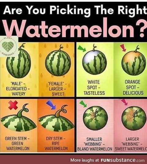 For those who don't know. Get the best melons