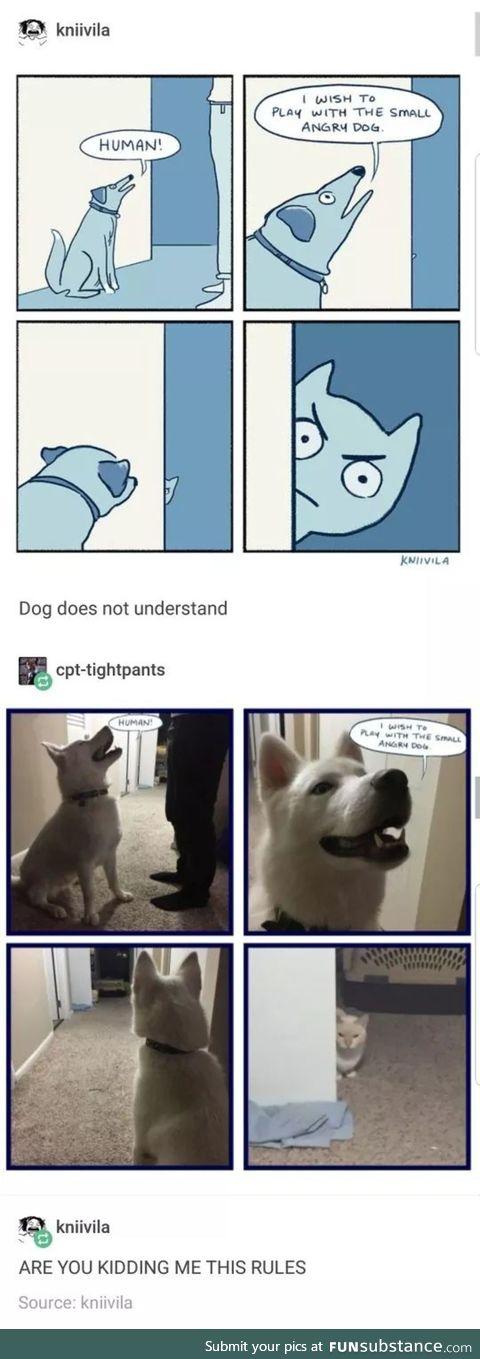 smol angery dog