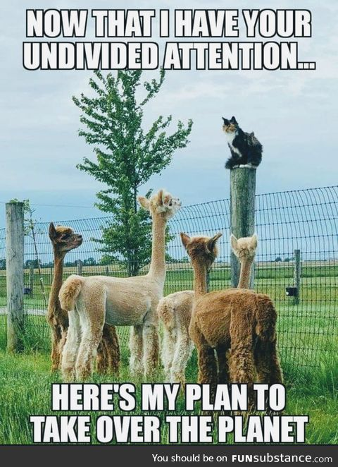 Starts with an Alpaca-lyps!!