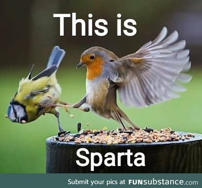 This is Sparta!! ????????