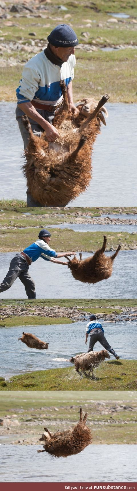 How the Mongolian bathe the sheep