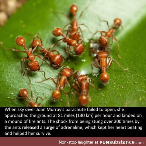 Thank you ants
