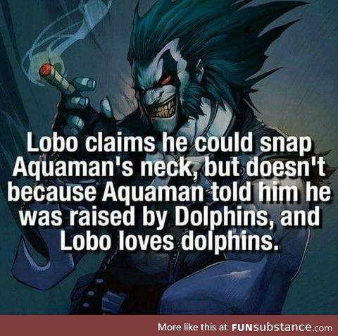 Lobo loves Dolphins