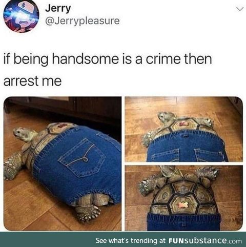 This is how turtles wear pants, apparently