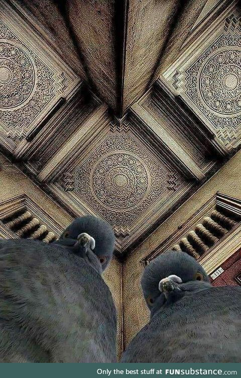 The photographer was lying on the ground, trying to shoot this ceiling. The pigeons were