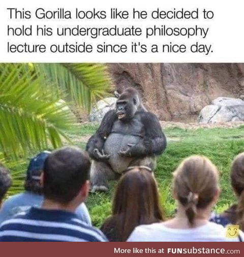 Gorilla does a funny human gesture