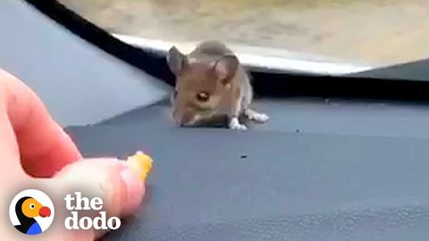 Guy finds a mouse on his dashboard. Handles it about as well as most of us handle spiders