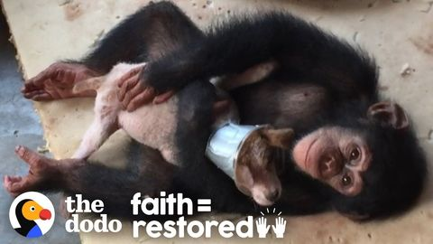 Sick puppy recovers with the help of some humans (and some chimpanzees). FeelGoodSubstance