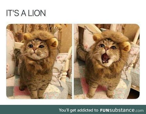 It's a lion