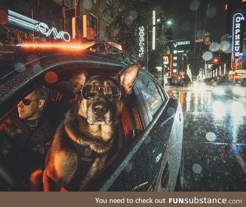 The Vancouver Police Department made a police dog calendar. This badass photo of a K9 and