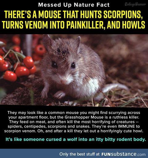 Random fact that u have never heard of