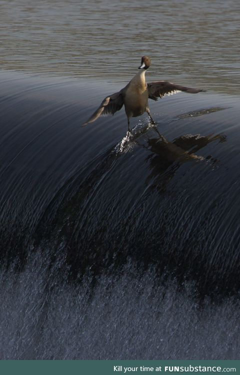 One duck to rule them all