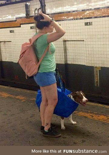 In NY's subway dogs are only allowed when they're being carried in a bag