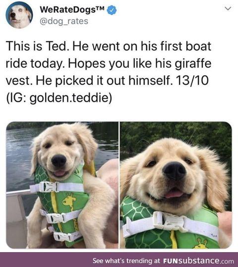 Wholesome doggo