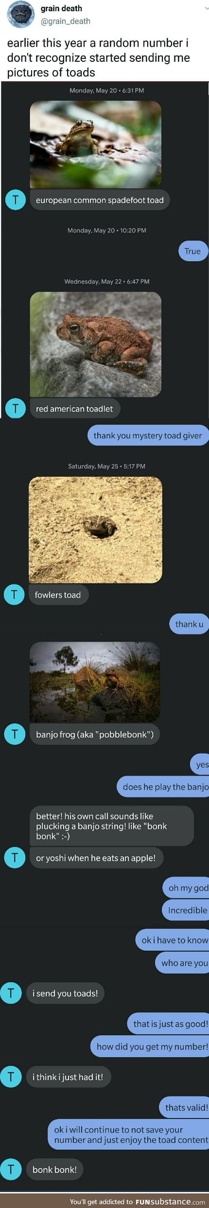 Wholesome_toads