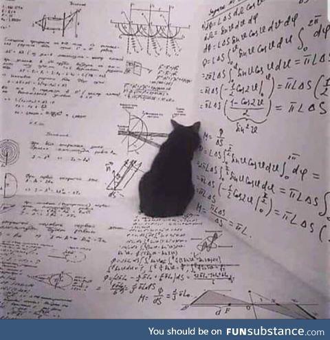 Meanwhile, inside the box, Schrodinger's cat plans its revenge