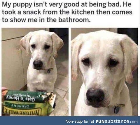 15/10 good doggo