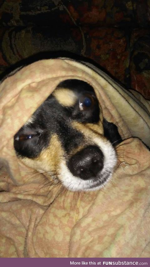 My Dog Mia during winter when my husband turned on the AC claiming he was to hot lol