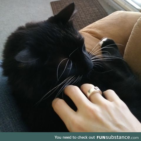 My cat: Shadow. also my hand