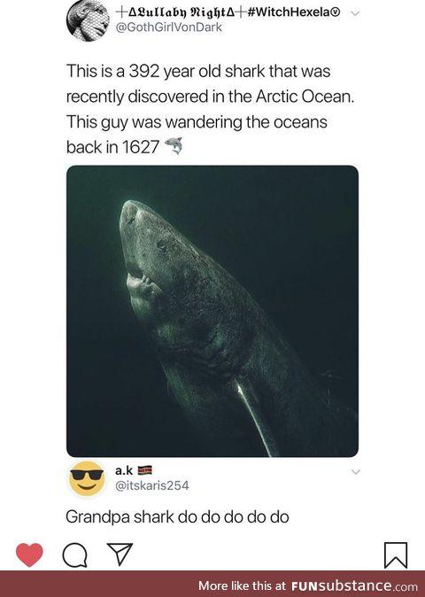 Grandpa Shark !!