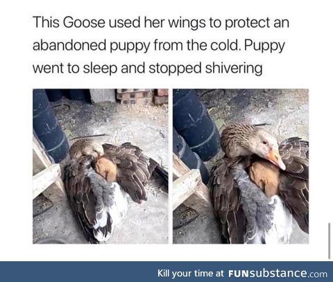 Momma duckling