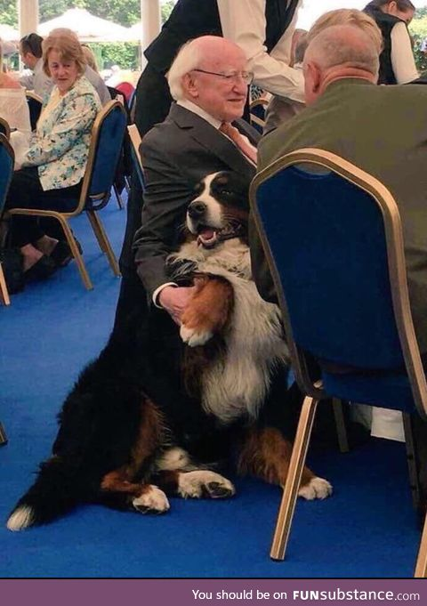 The President of Ireland with his Bernese Mountain dog Shadow