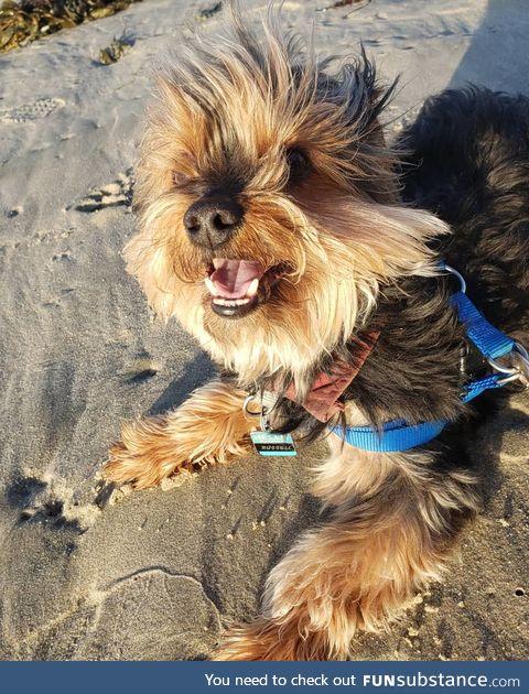 Daily Dose of Doggo #4