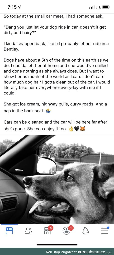 Dogs in cars getting coffee