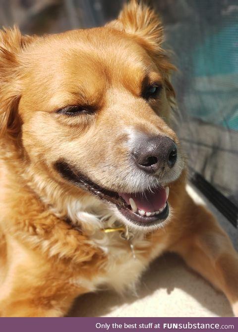 Daily Dose of Doggo #6