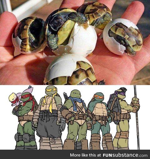 Silence... Ninjas Hatching !