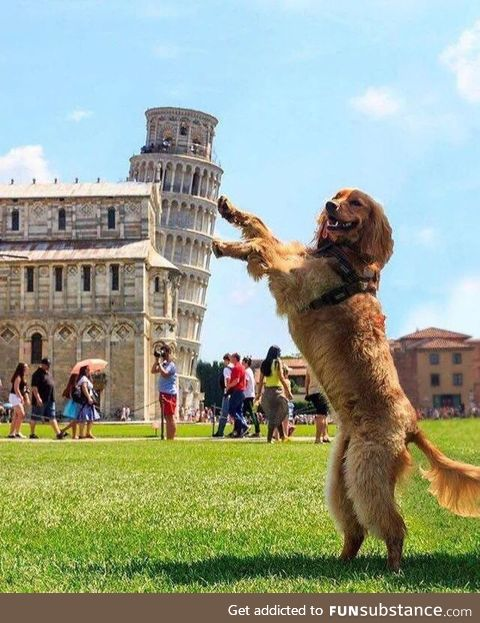 Leaning Tower of Goodboi