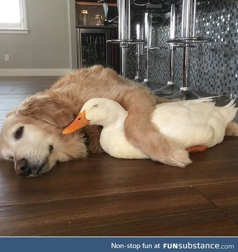 Ducks are not free this weekend, sorry