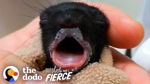 Baby Black Squirrels (FeelGoodSubstance)