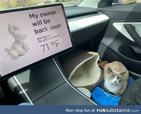 This cute cat just LOVES road trips!