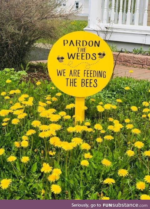Feed the beees