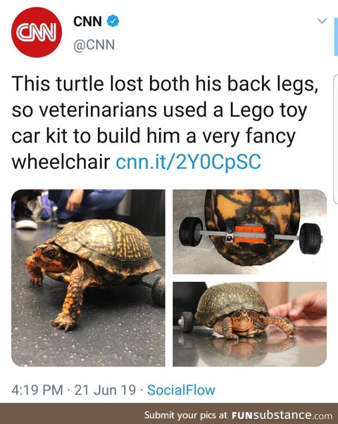 LSU veterinarians created a removable wheelchair for an accident-prone turtle