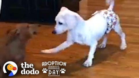 Dog saved from a Licensed Puppy Mill finally has a family (FeelGoodSubstance)