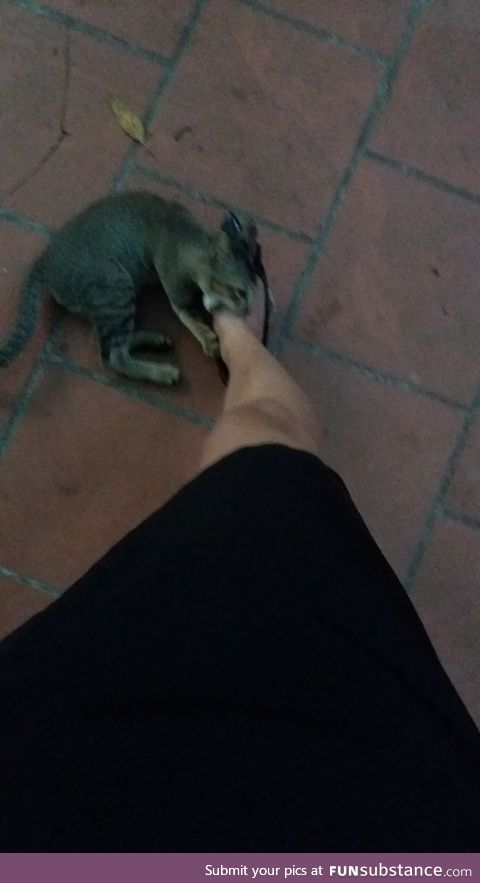 The kitten, 120, is no match to the high heels so he attacked my foot instead