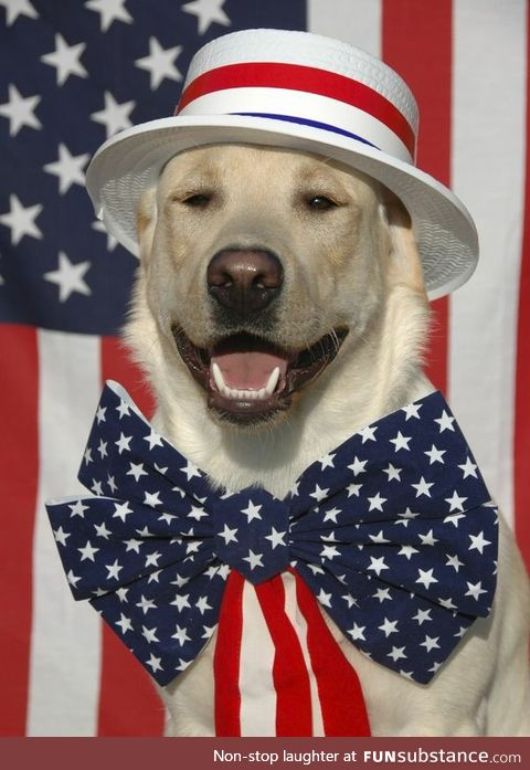 I don't really have any pro-american memes on hand, so here's a dog in a hat